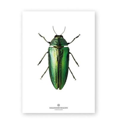 A4 Poster Żuk Zielony