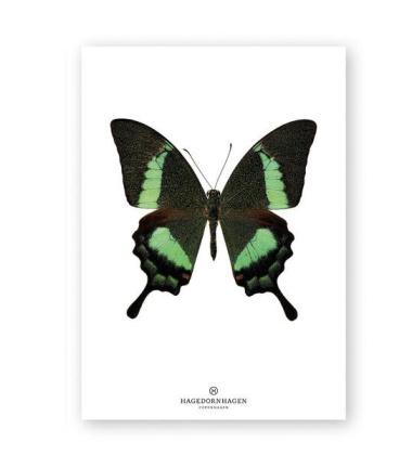 A4 Poster Motyl Green