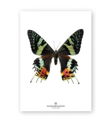 A4 Poster Motyl GREEN BUTTERFLY