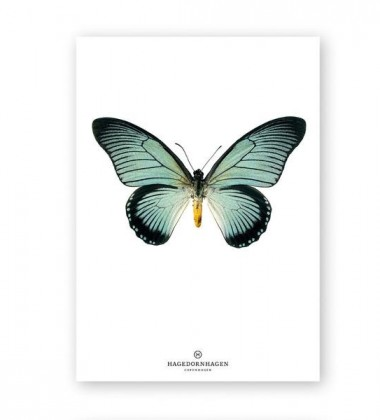 A4 Poster Motyl Papilio Zalmoxis