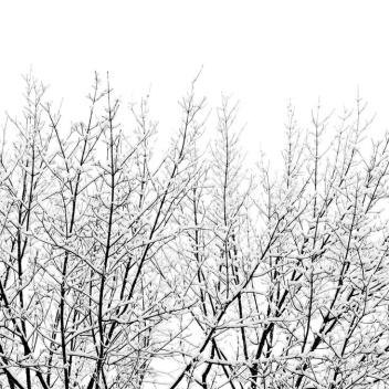 Snowy Tree Poster 50x70