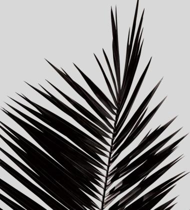 Palm Leaf Poster 50x70
