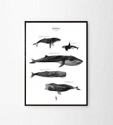 Poster w wieloryby KETOS 50X70