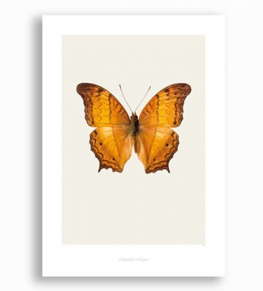 S12 Poster 42x59 Vindula Dejone - Cruiser Butterfly