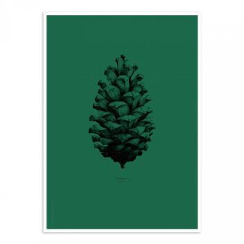 Pine Cone Poster 50x70 Dark Forest Green