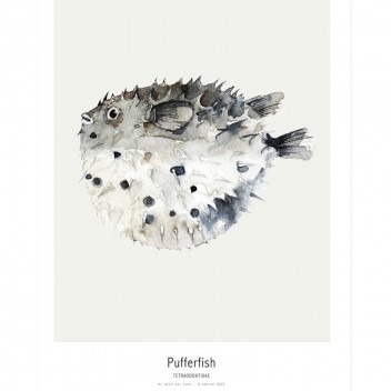 Ocean - Pufferfish Poster 30x40
