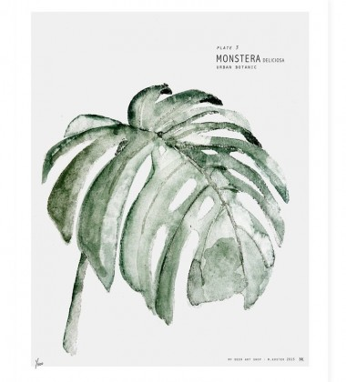 Urban Botanic - Plate 3 Monstera Poster 40x50