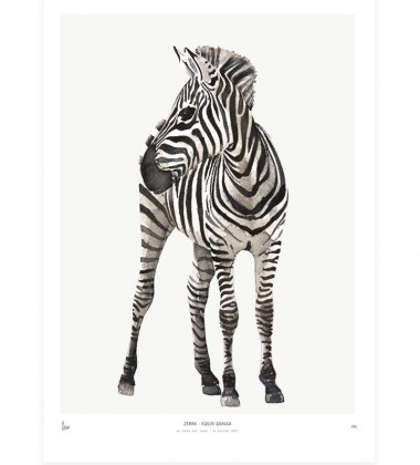 Poster Into The Wild 30x40 ZEBRA