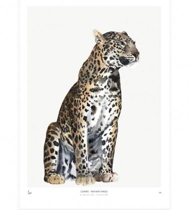 Poster Into The Wild 30x40 Leopard