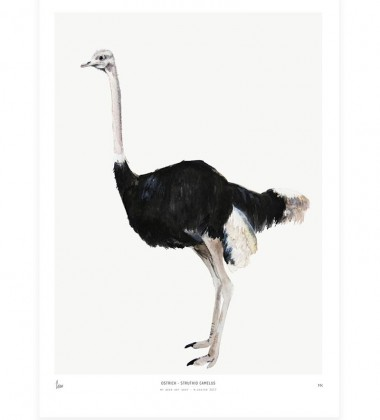 Poster Into The Wild 30x40 Ostrich