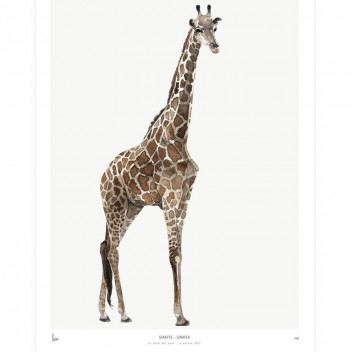 Poster Into The Wild 30x40 Giraffe ŻYRAFA