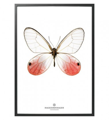 S13 Poster Motyl 50x70 RED BUTTERFLY