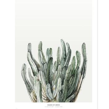 Poster Botanics Shades of Green 40x50 Cactus