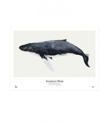 Ocean - Humpback Whale Poster 30x40