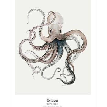 Ocean - Octopus Poster 30x40
