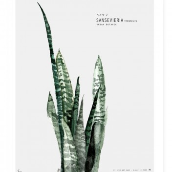 Urban Botanic - Plate 2 Sansevieria Poster 30x40