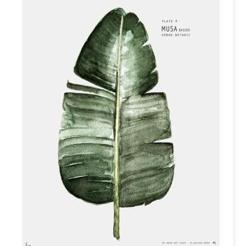 Urban Botanic - Plate 4 Musa Poster 30x40