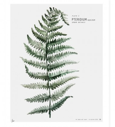 Urban Botanic - Plate 1 Fern Poster 30x40