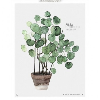 Poster Urban Botanic 30x40 Pilea Limited Edition
