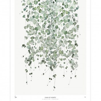 Poster Botanics 40x50 Chain of hearts Ceropegia Woodiii