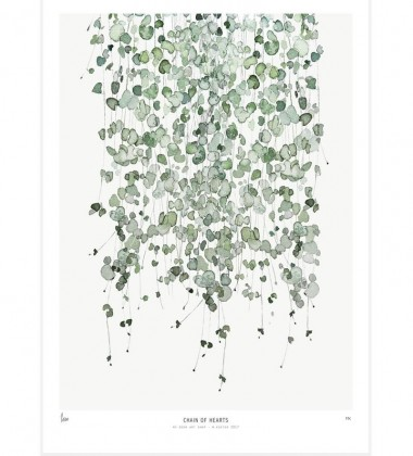 Poster Botanics 40x50 Chain of hearts Ceropegia Woodiii