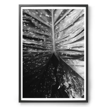 Botanical No.2 Poster 50X70