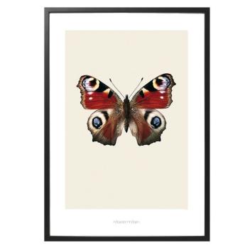 S8 Poster Motyl INACHIS IO 70x100 Czerwony