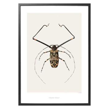B6 Poster Żuk 42x59 Acrocinus longimanus Harlequin Beetle