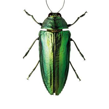 A4 Poster Żuk Zielony GREEN BUG