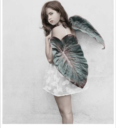 Poster 50x70 THIRTEEN 2 Grand Leaf Wings By Vee Speers