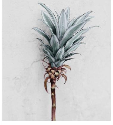 Poster 15x21 BOTANICA Ananas Comosus by Vee Speers