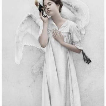 Poster 15x21 THIRTEEN 12 Swan By Vee Speers