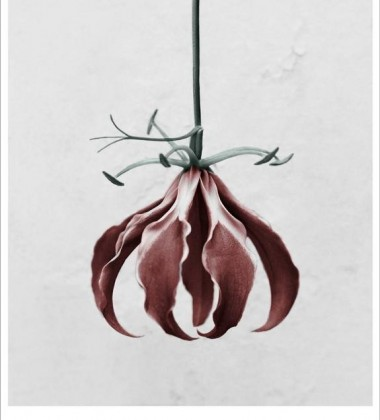 Poster 15x21 BOTANICA Gloriosa Superba By Vee Speers