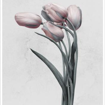 Poster 15x21 BOTANICA Tulipa Gesneriana By Vee Speers