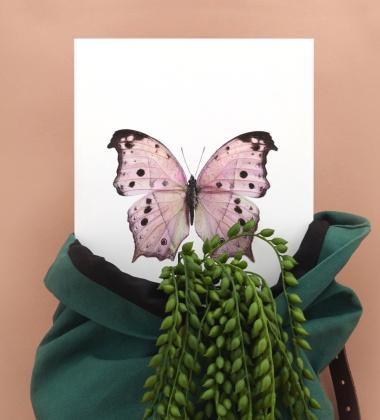 Poster motyl 30x40 Salamis Parhassus Pink Różowy