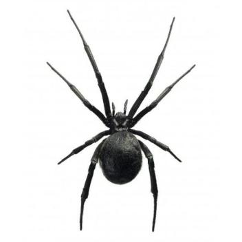 Poster pająk 30x40 Black Widow Czarny