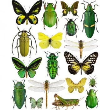 Poster motyle i żuki 30x40 Yellow-Green Bugs