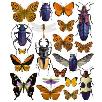 Poster motyle i żuki 30x40 Purple-Orange Bugs