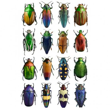 Poster żuki 30x40 Multicolour Beetles Bugs