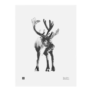 Poster renifer Teemu Jarvi 30x40 RAINDEER