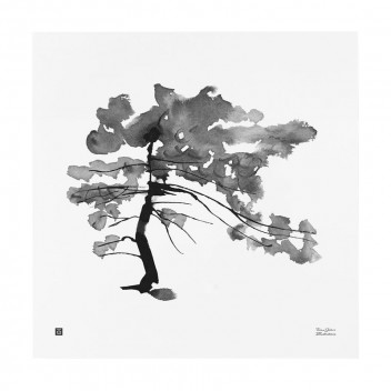 Poster sosna Teemu Jarvi 50x50 PINE TREE