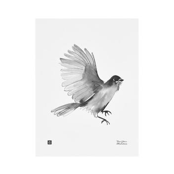 Poster sójka syberyjska Teemu Jarvi 30x40 SIBERIAN JAY
