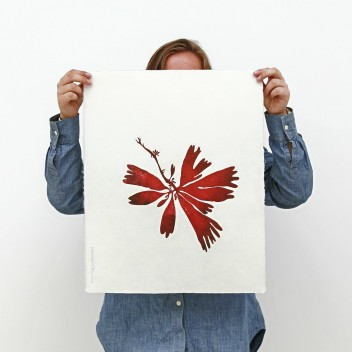 Rycina 52x43 cm DILLISK Seaweed Collection