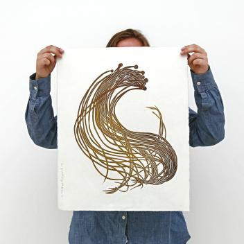 Rycina 52x43 cm SEA SPAGHETTI Seaweed Collection