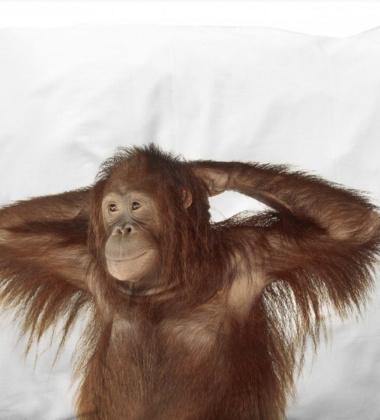 Pościel bawełniana z małpą 140x200 BANANA MONKEY