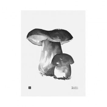 Poster grzyby Teemu Jarvi 30x40 PORCINI