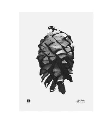 Poster szyszka Teemu Jarvi 30x40 PINE CONE