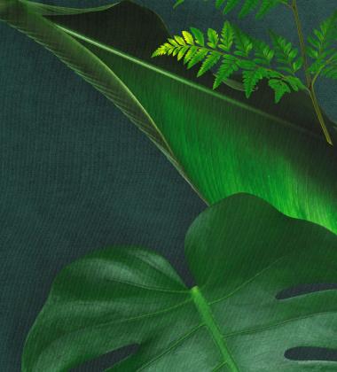 Pościel bawełniana w las deszczowy 140x200 GREEN FOREST