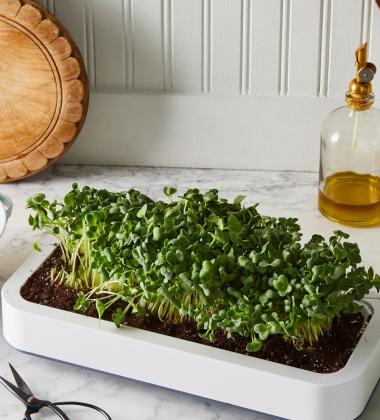 Szklarnia - doniczka na zioła w kuchni MICROGREENS GROWER by Chef'n