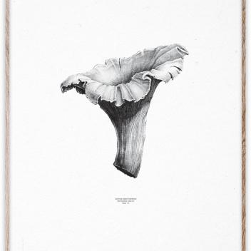 Poster Chanterelle White-Black 50x70 Biały